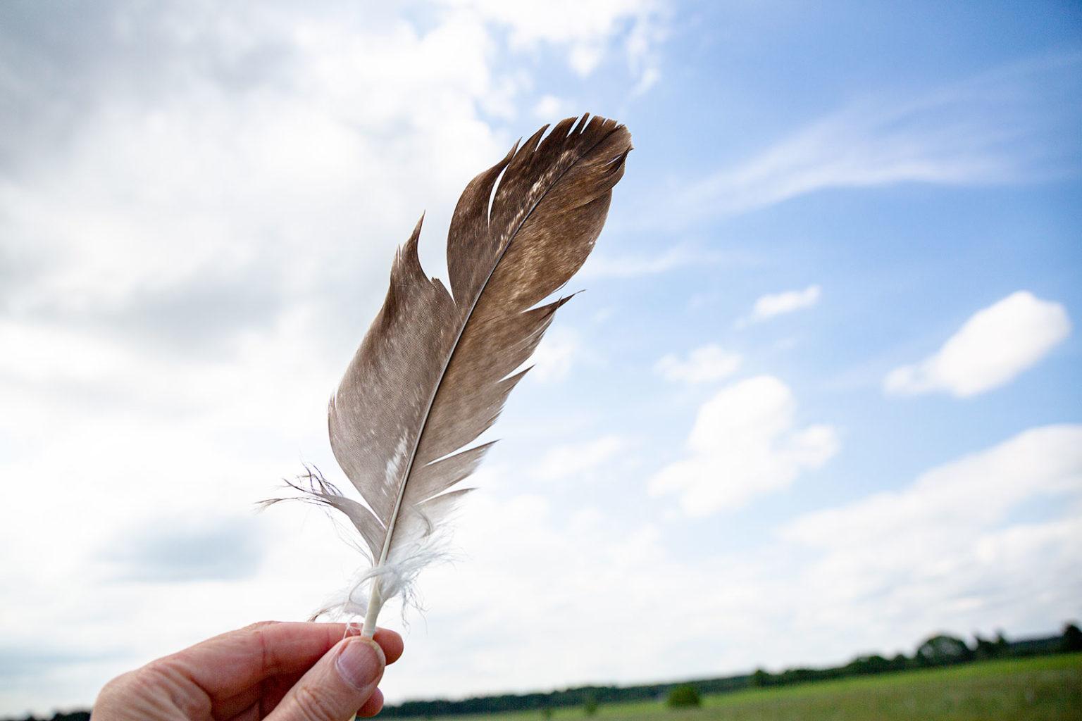 Die Feder ist tatsächlich von einem Seeadler.