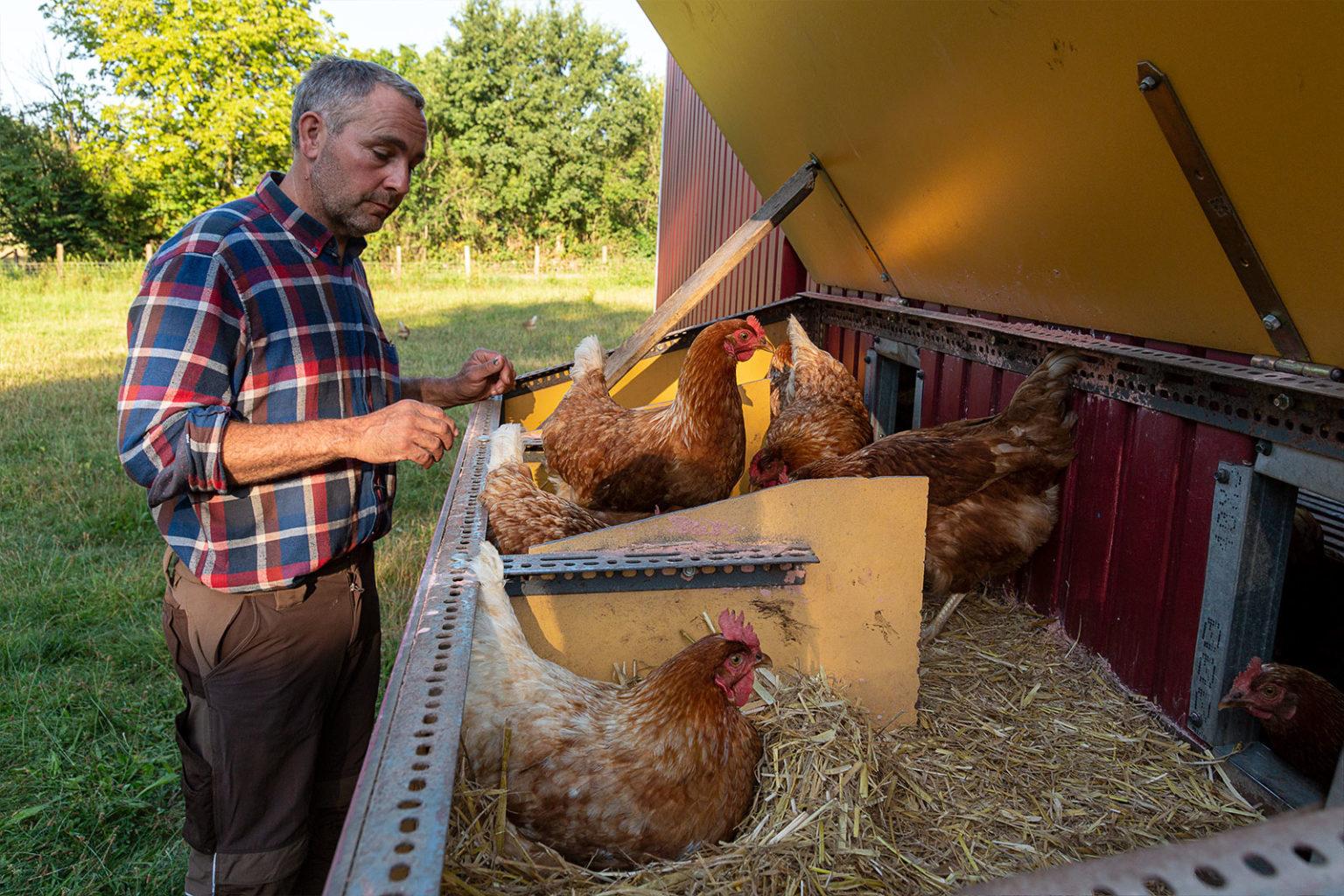Hühner legen ihre Eier gern im Dunkeln. Nur zum Entnehmen der Eier öffnet Dirk Tensfeldt den Deckel der strohausgelegten Legenester.