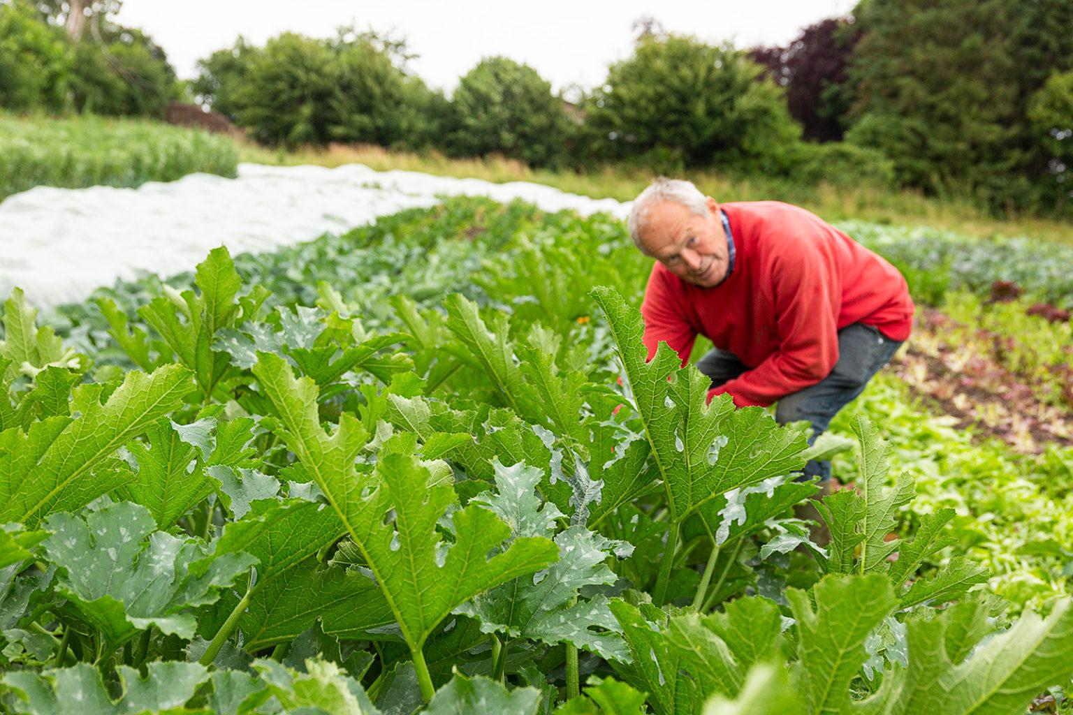 Wolfgang Kobs auf seinen dreieinhalb Hektar großen Gemüsefeldern.